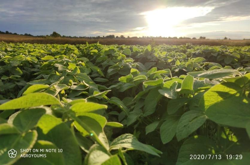 Popraw żyzność gleby – kup mieszanki poplonowe w firmie Oseva!