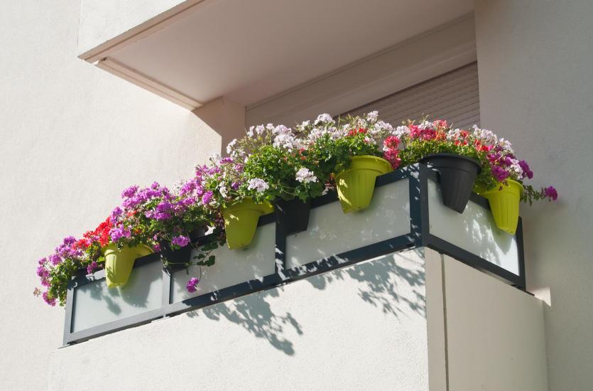 Jakie rośliny będą najlepsze na balkon?