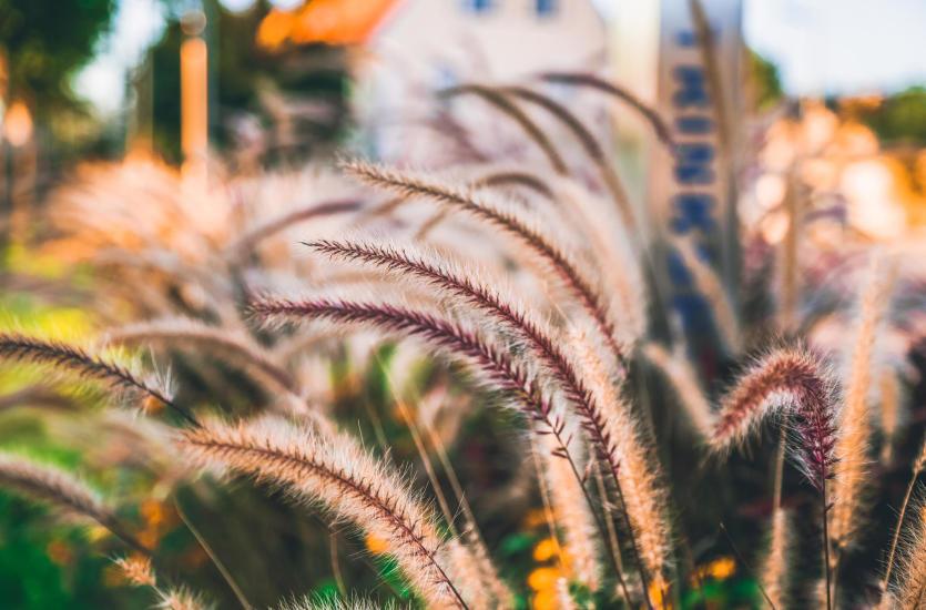 Z czym łączyć trawy ozdobne?