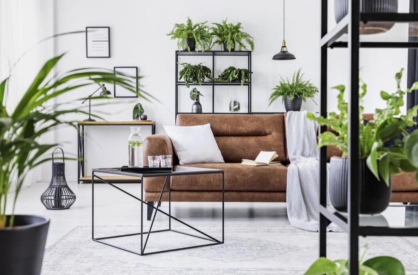 Urban jungle, czyli jak stworzyć dżunglę w mieszkaniu?