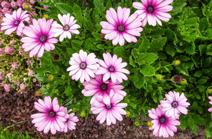 Bajkowy ogród – zadbaj o wysokiej jakości rośliny
