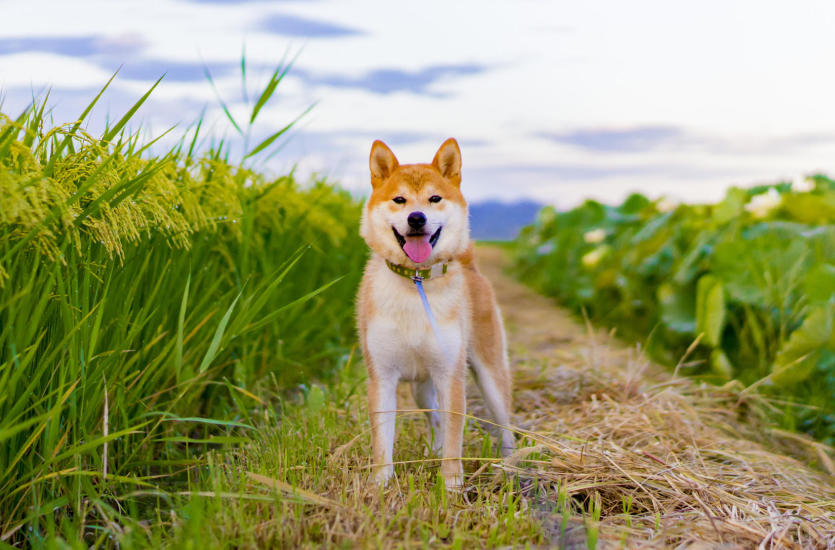 Pies z legalnej hodowli – dlaczego warto?