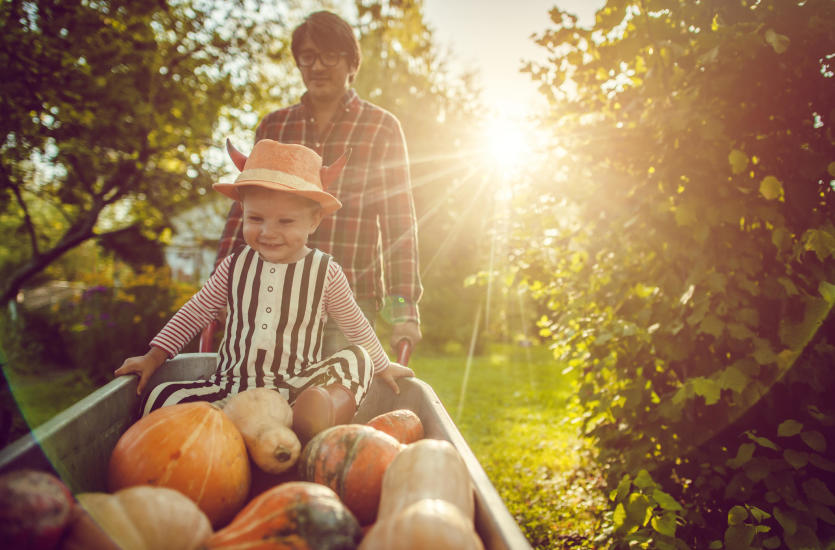 Осенние цветы.  Какие растения украшают сад в это время года?  Какие стоит сажать?