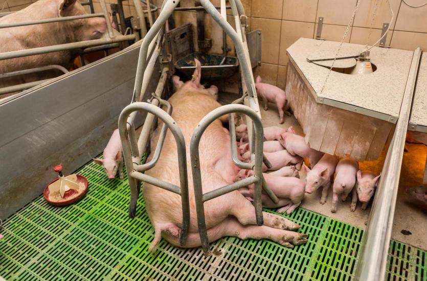 Rola ogrzewania w hodowli zwierząt