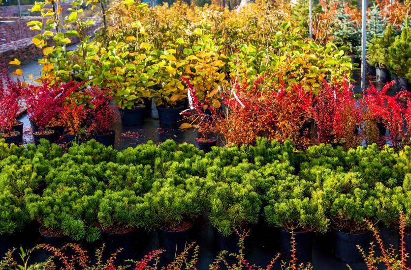 Rozbudowana oferta szkółek drzew i krzewów
