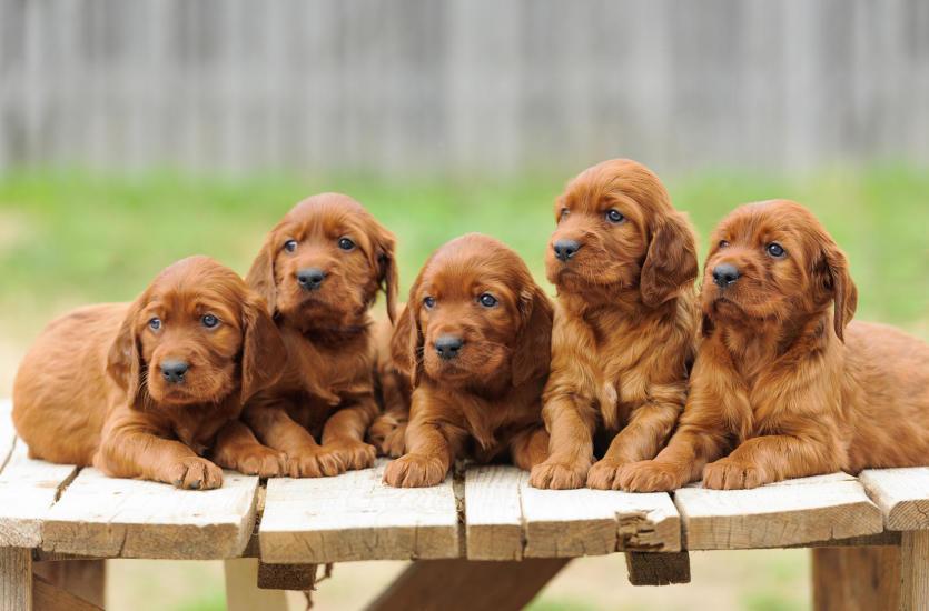 Antykoncepcja psów – co warto o niej wiedzieć?