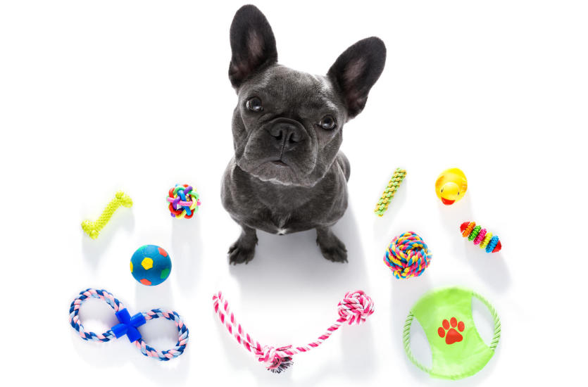 Jakie zabawki dla psa wybrać? Poradnik
