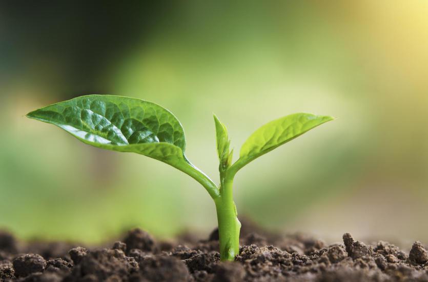 Jak zapewnić sobie obfite plony? Krótki poradnik