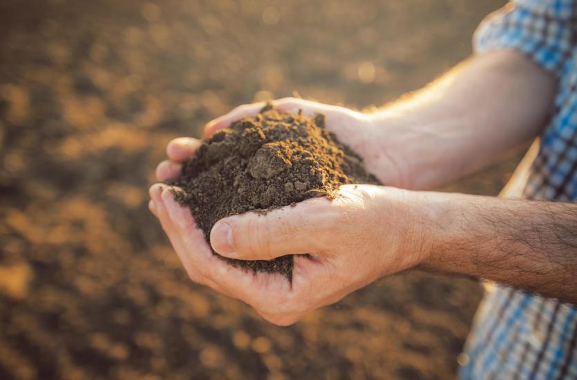 Odpowiednie spulchnienie gleby – dlaczego jest tak ważne?