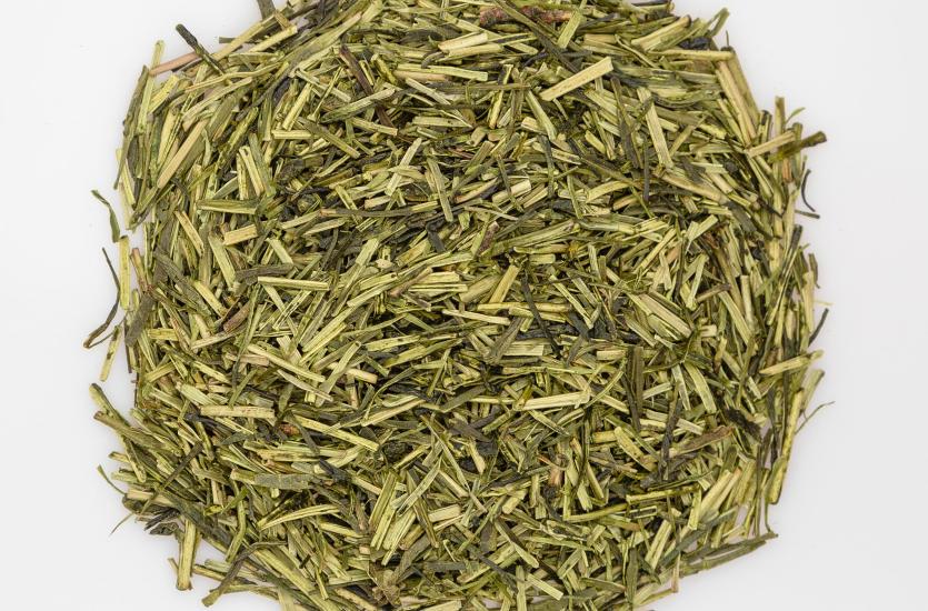 Zielona herbata, jako lek przeciwnowotworowy i przeciwstarzeniowy