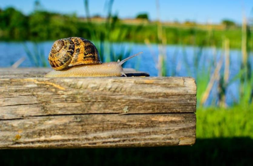 Dlaczego warto polubić ślimaki?