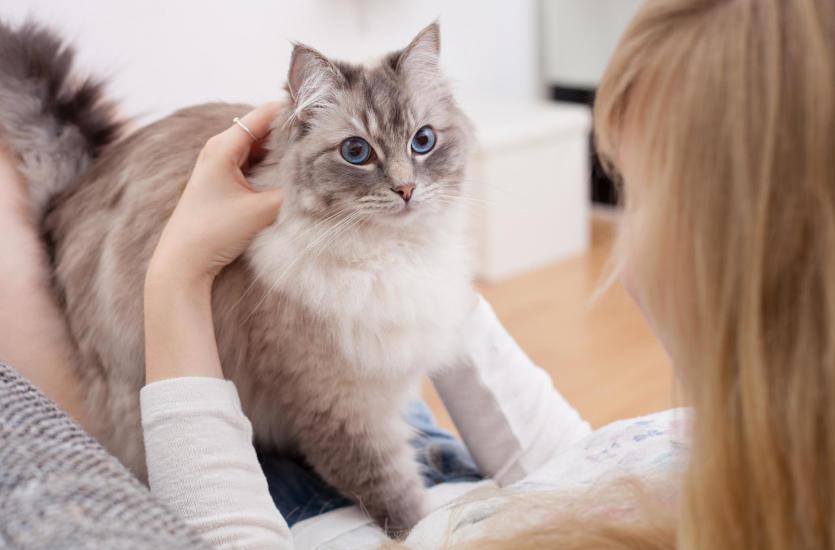 Jak leczyć alergię na kota?