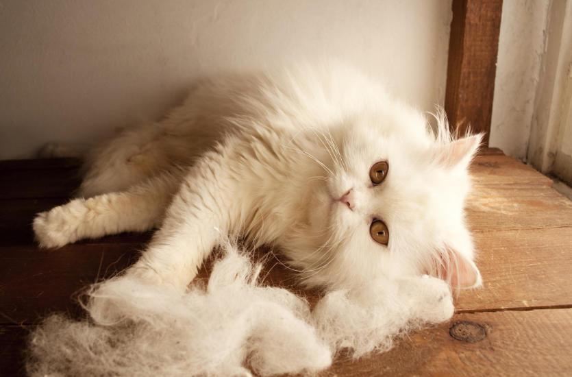 Jak utrzymać czystość podłóg, gdy w domu jest zwierzak?