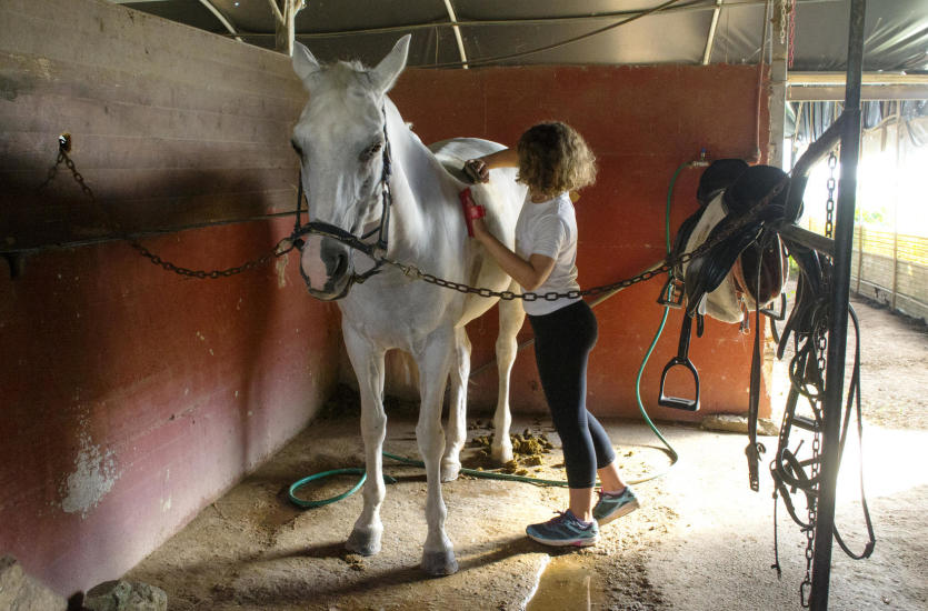 Podstawowe zasady czyszczenia i pielęgnacji koni