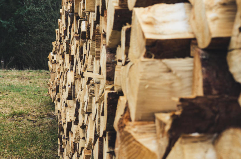 Dobre drewno na opał pochodzi z drzew liściastych