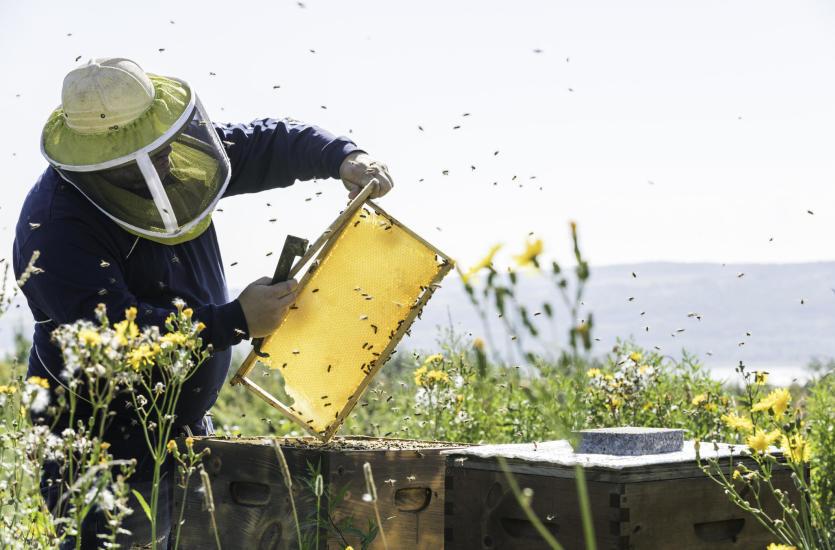 Jak wygląda praca przy ulach oraz jak powstaje miód w ulu?
