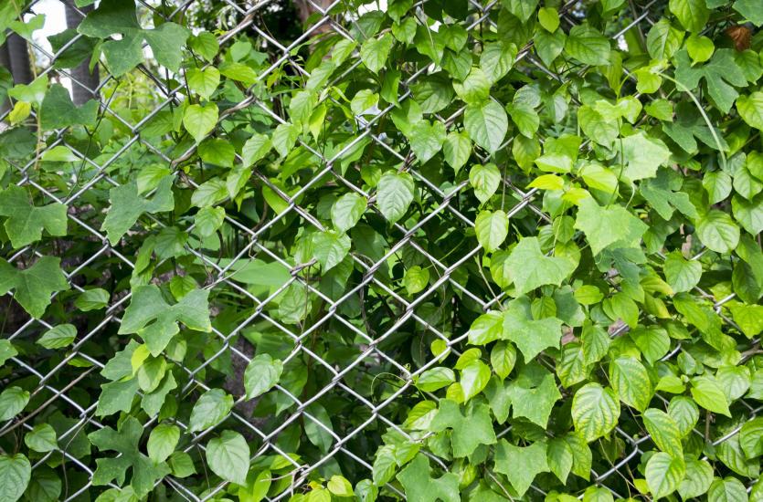 Wygodne ogrodzenie dla Twojej posesji