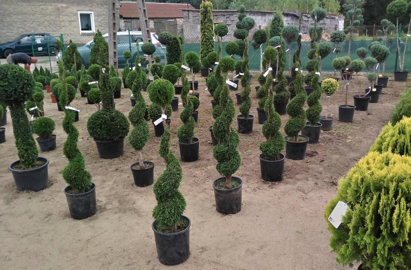 Dlaczego Warto Posatwić Na Formowane Drzewa I Krzewy W Ogrodzie