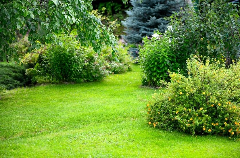 Krzewy ozdobne kwitnące w ogrodzie
