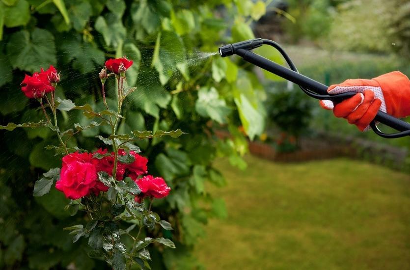 Podstawowe zasady pielęgnacji ogrodu