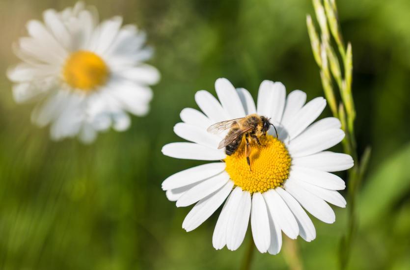 Pszczoły w ogrodzie – czy to dobre rozwiązanie?