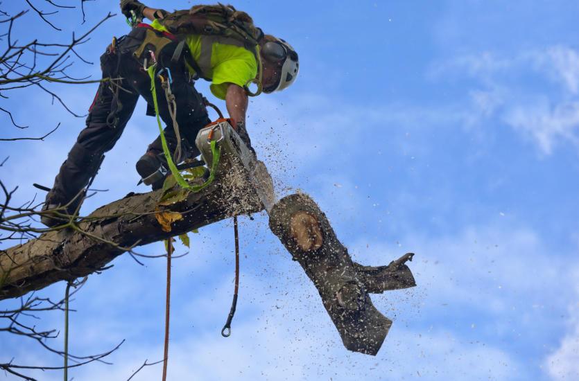 Czym charakteryzuje się wycinka drzew metodą alpinistyczną?