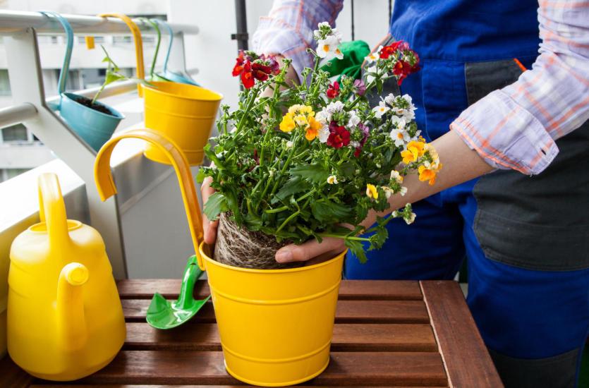 Jakie Rośliny Sadzić Na Balkonie I Tarasie Popularne Kwiaty
