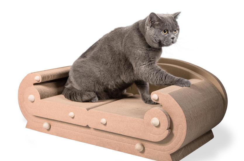 Влияние когтеточки на темперамент кошки, почему кошки чешутся?
