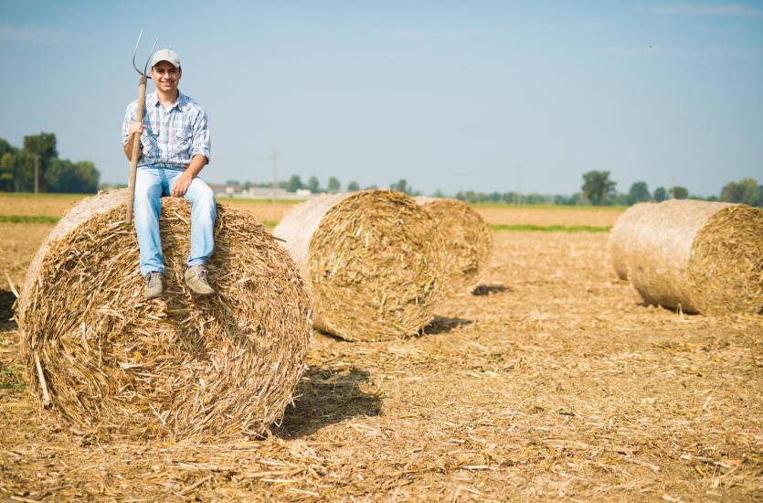 Jaką ochronę zapewniają ubezpieczenia rolne?