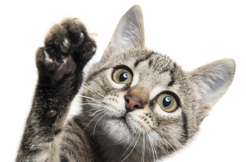 Najważniejsze szczepienia kota