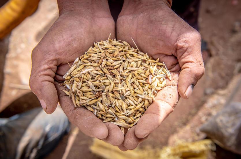 Czyszczalnie mechaniczne  rodzaje i użycie w rolnictwie