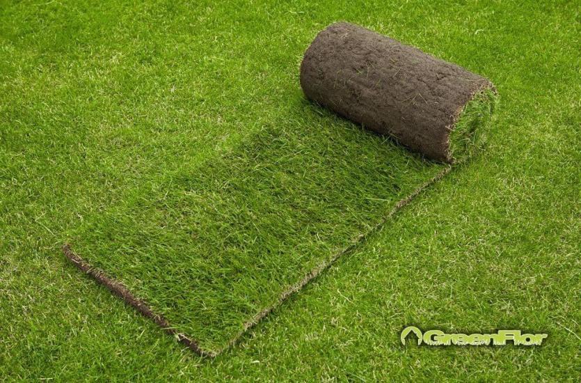 Почему стоит инвестировать в рулонный газон?