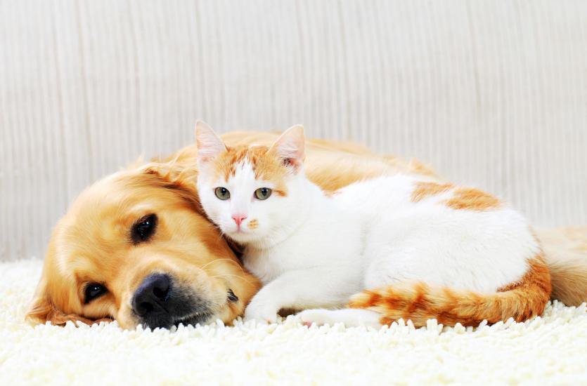 Grzybica skóry u psów i kotów – rozpoznanie i leczenie
