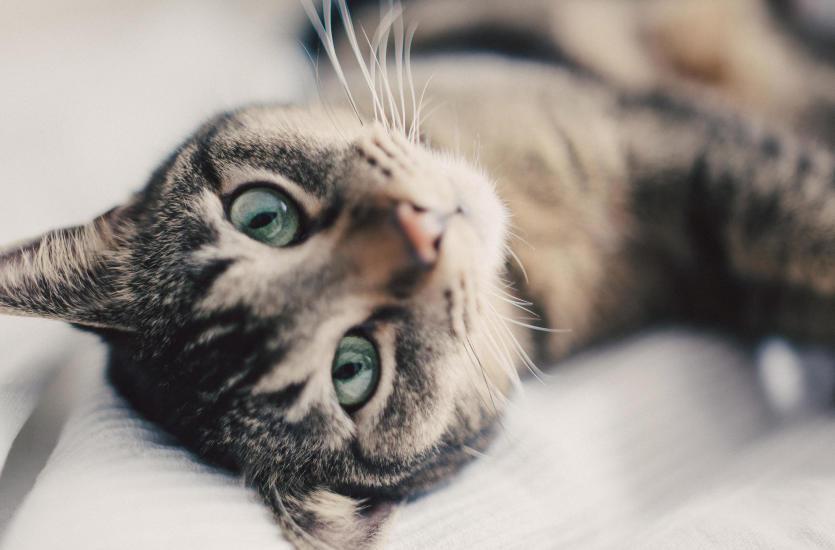 Koci behawiorysta - kim jest i kiedy skorzystać z jego pomocy