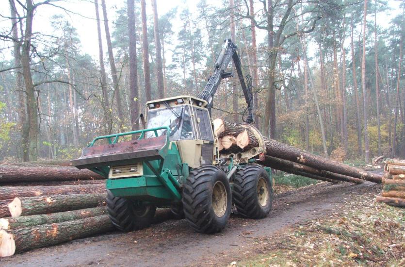 Profesjonalne usług leśne