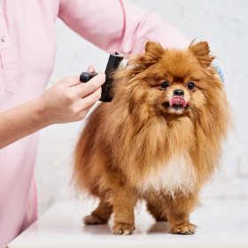 Strzyżenie, trymowanie i układanie psich fryzur w specjalnym salonie