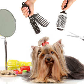 Kompleksowa pielęgnacja psa w salonie urody