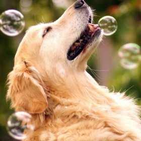 Zadbaj o psie szczęście z firmą EVAB– ubranka i kosmetyka dla czworonogów!