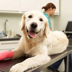 Gabinet weterynaryjny Dollitle – tu naprawdę kochają zwierzęta