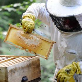 Najlepsze siatki metalowe dla pszczelarza