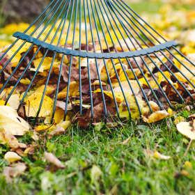 Usługi porządkowe w ogrodnictwie