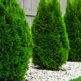 Szkółka ogrodnicza, czyli żłobek dla roślin