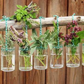 Zdrowa herbatka, czyli jak prawidłowo stosować zioła