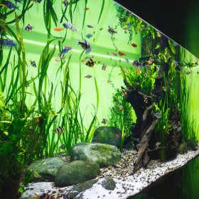 Szklane akwarium - co powinniście o nim wiedzieć?