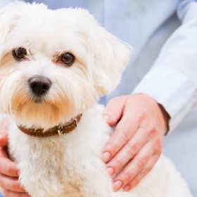 Stomatologia u zwierząt domowych