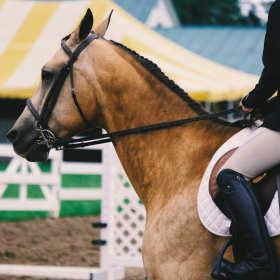 Jak wybrać siodło do jazdy konnej?