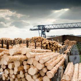 Przeróbka pozyskanego drewna leśnego w profesjonalnym tartaku