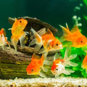 Podwodny świat w salonie. Jak założyć akwarium?
