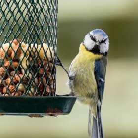 Nasi najmniejsi przyjaciele – żywienie gryzoni i ptaków