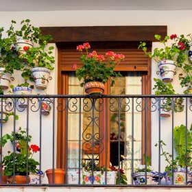 Zieleń w domu i na balkonie – kawałek ogrodu w doniczce